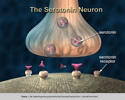 Serotonin is a buzz word in the world of health and nutrition but do you know why it's so important? Here are 5 things you need to know about serotonin